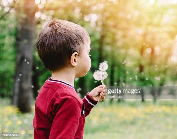 Little boy blowing dandelions