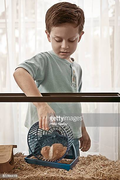 Little boy caring for his hamster