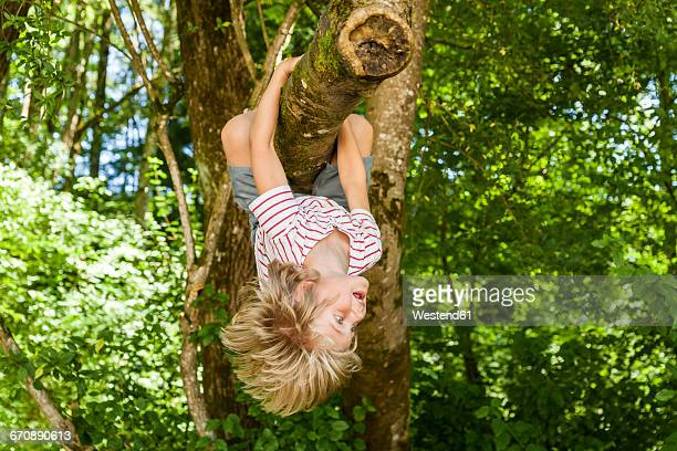 Little boy climbing on a tree in the forest