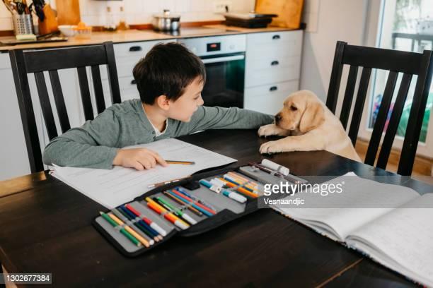 ragazzino che fa i compiti a casa - dog pad foto e immagini stock