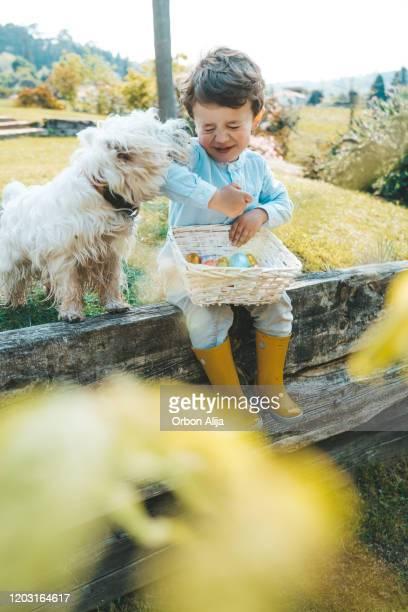 petit garçon mangeant des oeufs de pâques de chocolat. - chasse aux oeufs de paques photos et images de collection