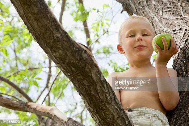 Little boy eating an apple in tree