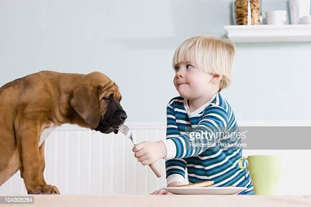 Kleiner Junge Füttern Hund