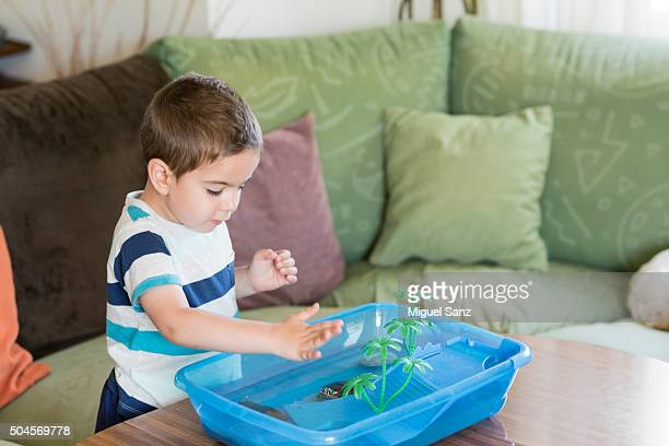Little boy feeding his small turtle at home