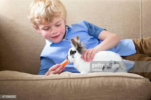 Little Boy alimentación de conejo mascota