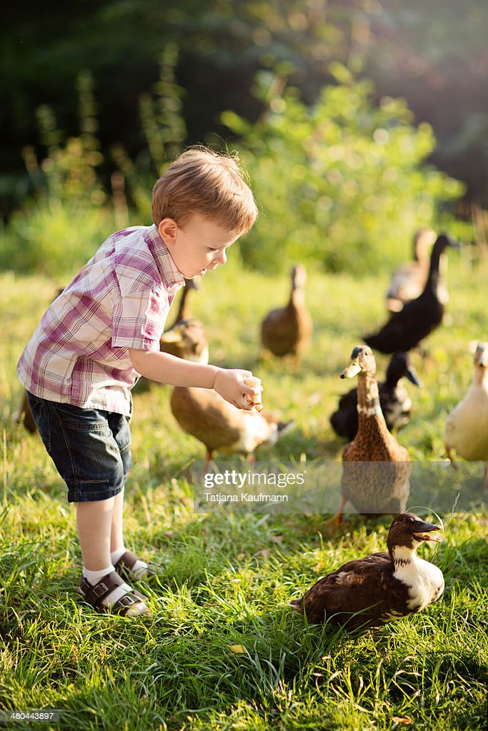 Little Boy feeding some Ducks with old Bread : Stock Photo
