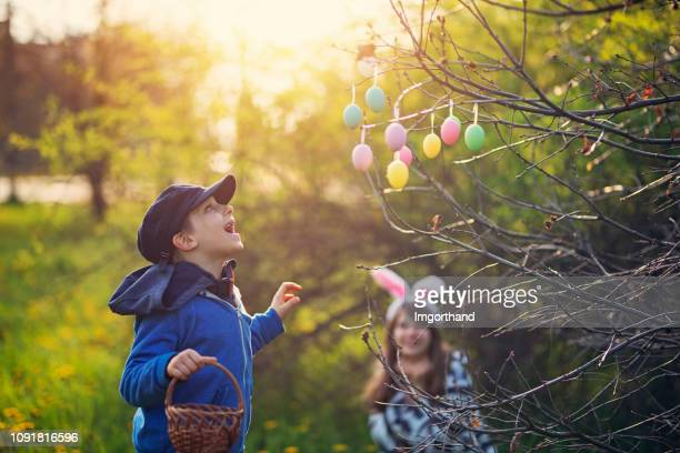 little boy found easter eggs hidden on tree - easter egg hunt stock pictures, royalty-free photos & images