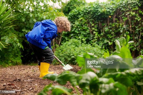 little boy gardener - children only stock pictures, royalty-free photos & images