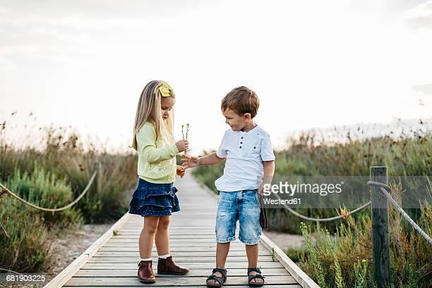 little boy gifting little girl flowers on boardwalk in nature - gift lounge stock-fotos und bilder