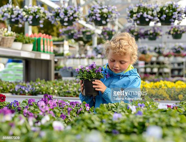 little boy holding a flower pot - flower pot stock pictures, royalty-free photos & images