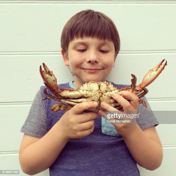 little boy holding a maryland steamed crab - blue crab stock photos and pictures