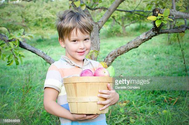 """little boy holding basket of apples - """"danielle donders"""" stock pictures, royalty-free photos & images"""