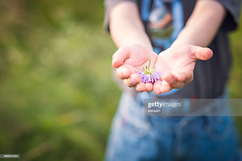 Little Boy Holding Flower : Stock Photo