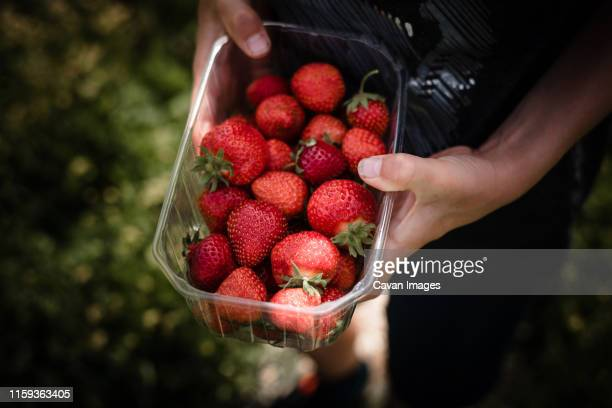 little boy holding punnet of freshly picked strawberries - strawberry stock pictures, royalty-free photos & images