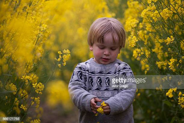 Little boy holds a rape flower in his hands.