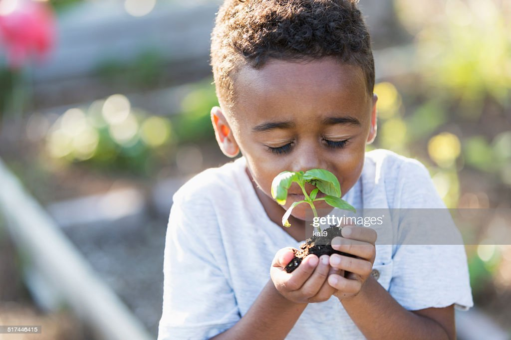 Little boy in garden, smelling fresh herbs : Stock Photo