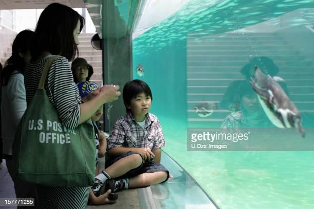 Little Boy in Tokyo sea life park, Japan