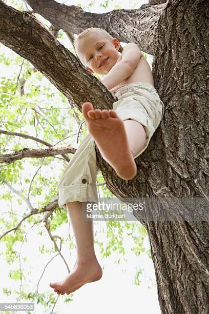 Little boy in tree