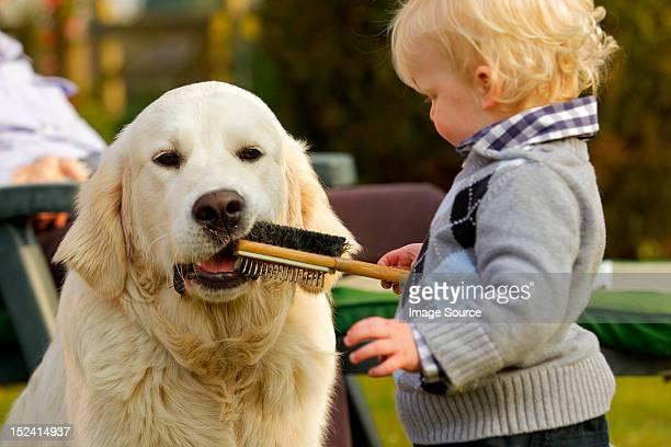Little boy letting golden retriever chew a brush