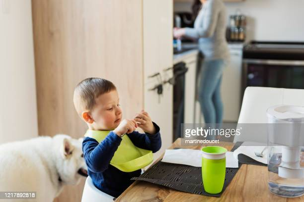 "little boy looking at himself in a spoon at lunch time. - ""martine doucet"" or martinedoucet stock pictures, royalty-free photos & images"