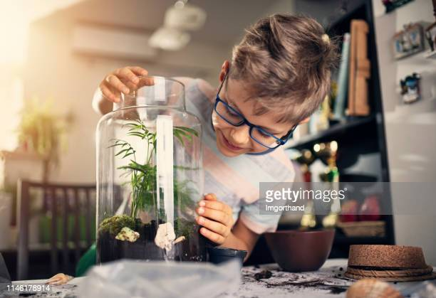 little boy making plant bottle garden - ecosystem stock pictures, royalty-free photos & images