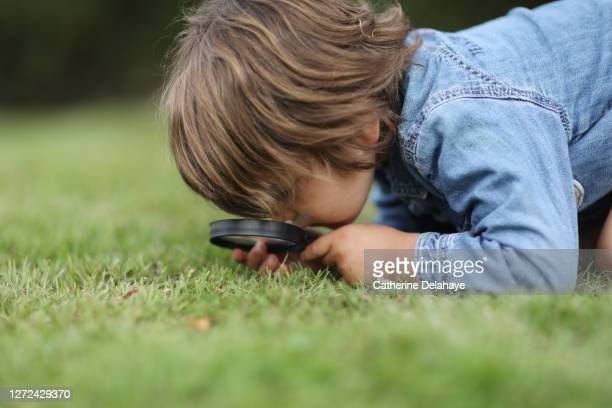 a little boy observing insects with a magnifying glass - discovery stock pictures, royalty-free photos & images
