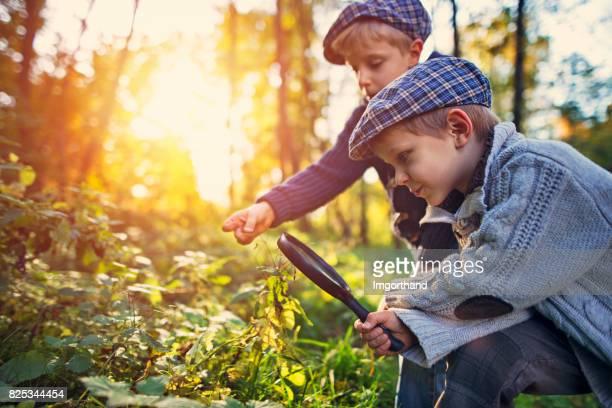 Kleiner Junge Samen Röhricht-Pflanze zu beobachten