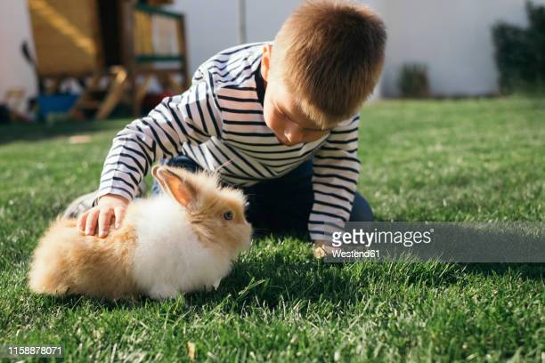 little boy petting a bunny in garden - rabbit stock pictures, royalty-free photos & images