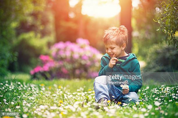 Little boy picking up daisy flowers for mother's day