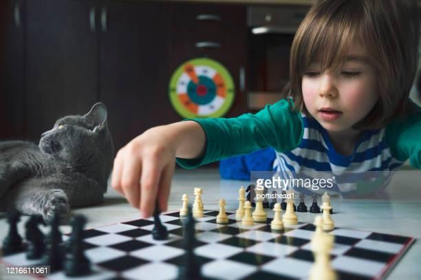 weinig jongen die schaak speelt. kat naast hem. - wonderkind stockfoto's en -beelden