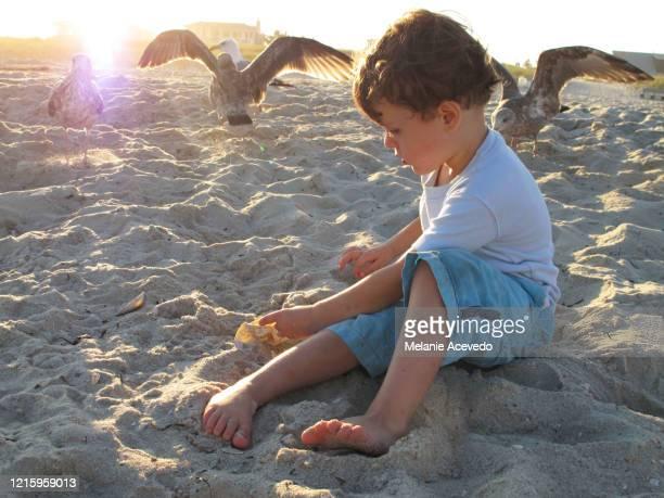 little boy playing in sand seagulls in background - calzoncini da bagno foto e immagini stock