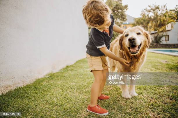 little boy playing with a dog - dog stock pictures, royalty-free photos & images