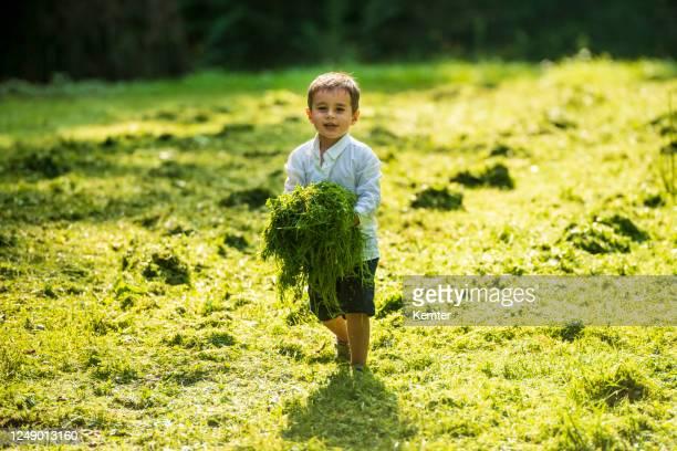 kleiner junge spielt mit frisch geschnittenem gras - kemter stock-fotos und bilder