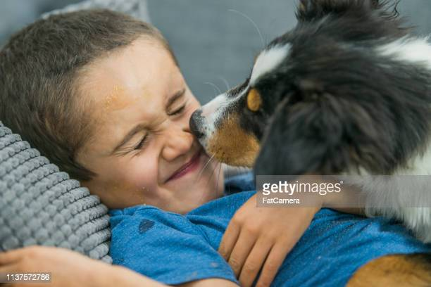 little boy playing with puppy - border collie stock pictures, royalty-free photos & images