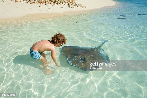 little boy playing with stingray - caribbean culture stock pictures, royalty-free photos & images