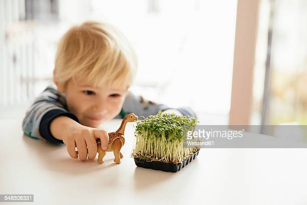 Little boy playing with toy dinosaur and box of cress on a table
