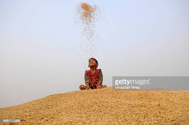 A little boy plays with rice grains during crop harvesting on November 23 2015 in Noida India India is one of the world's largest producers of white...