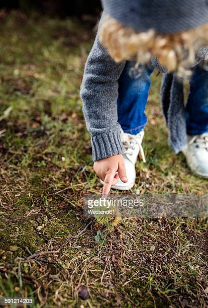 Little boy pointing on sweet chestnut lying on a meadow