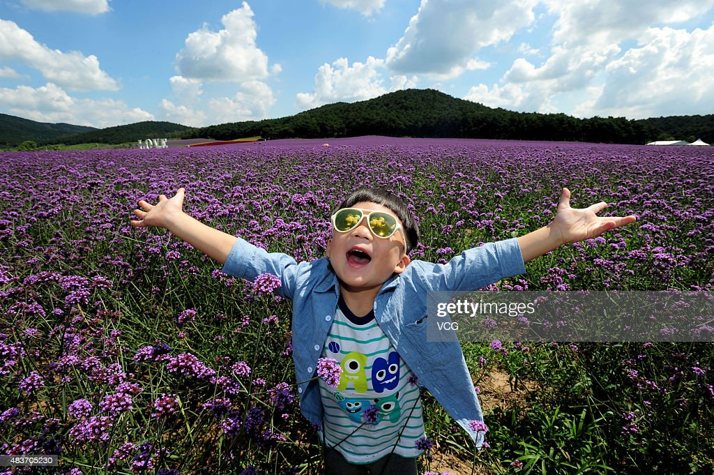 China's Largest Lavender Theme Park Welcomes Blossom In Shenyang : News Photo