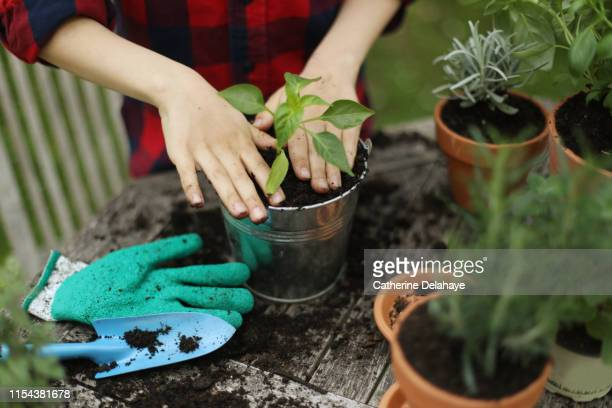 a little boy potting plants in the garden - potting stock pictures, royalty-free photos & images
