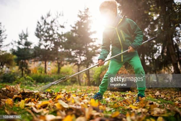 little boy raking autumn leaves - rake stock pictures, royalty-free photos & images