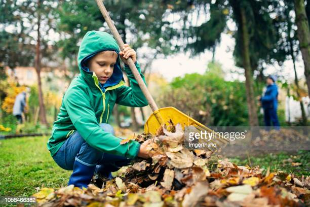 little boy raking autumn leaves - young leafs stock photos and pictures