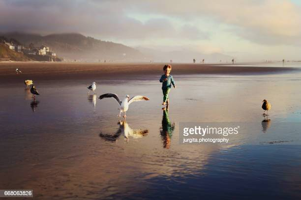 Little boy running with seagulls