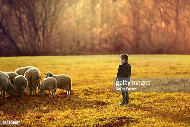 Little boy shepherd watch over the sheep