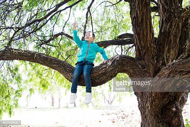 Little boy sitting on a tree branch