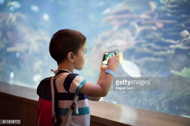 little boy taking a snapshot of the fish in an aquarium - aquarium stock pictures, royalty-free photos & images