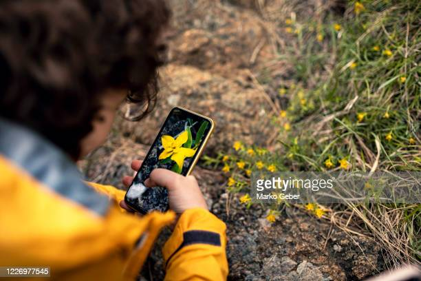 little boy taking pictures of flowers - photographing stock pictures, royalty-free photos & images