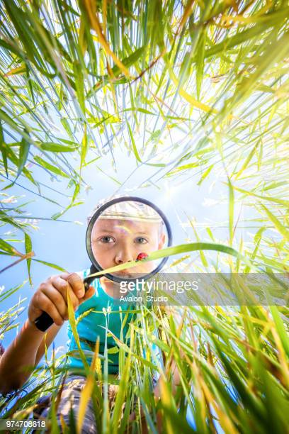 Little boy watches through the magnifying glass a ladybug in the grass in the meadow