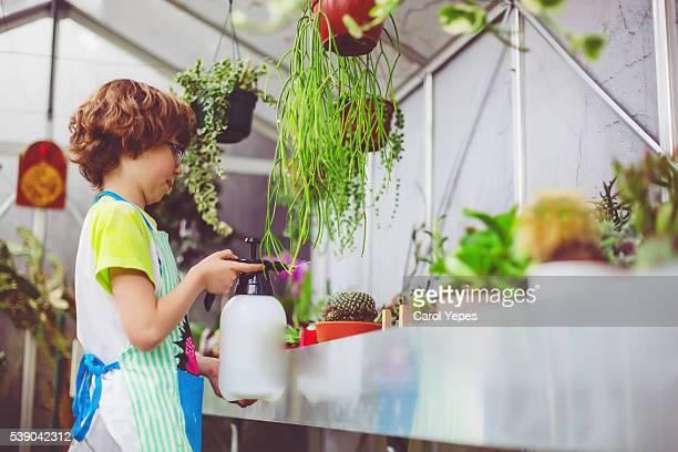 little boy watering plants in greenhouse