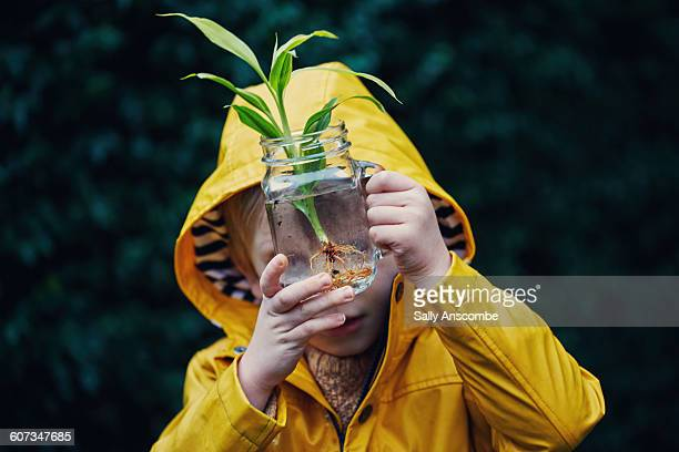 little boy with a plant in a jar of water - curiosity stock photos and pictures